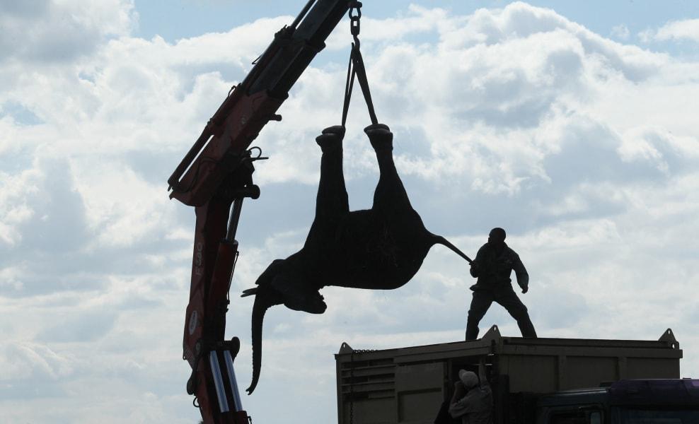 Elephant relocation