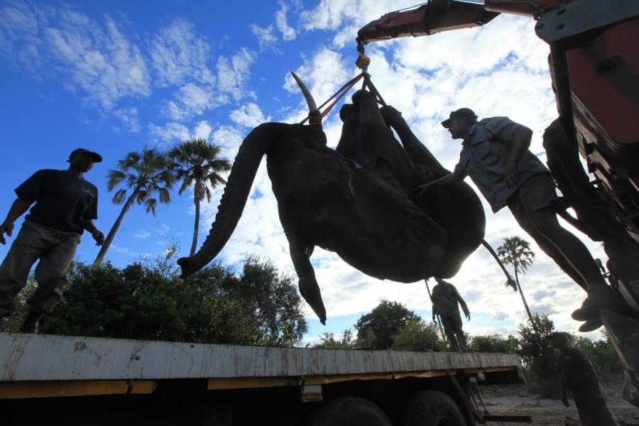 elephant relocation 5