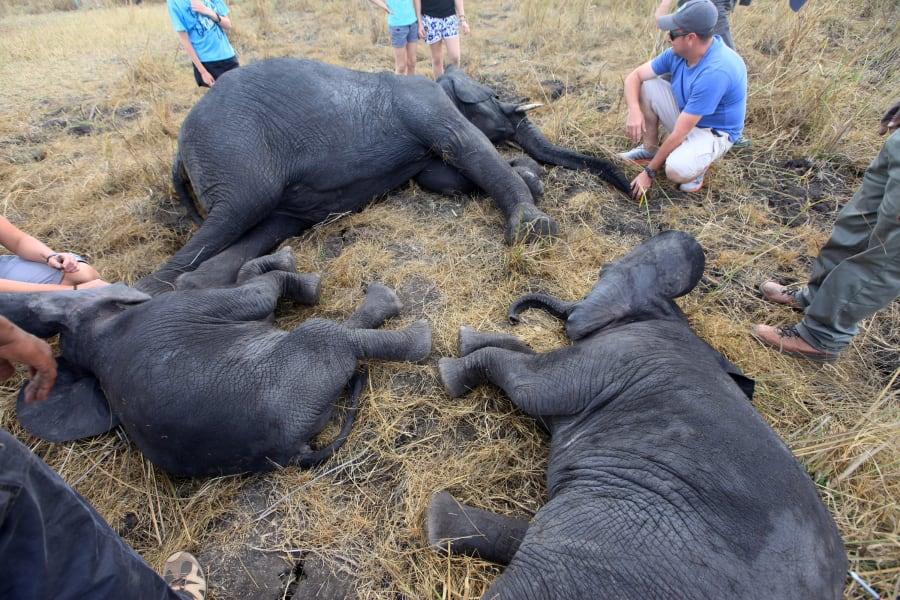 elephant relocation 7