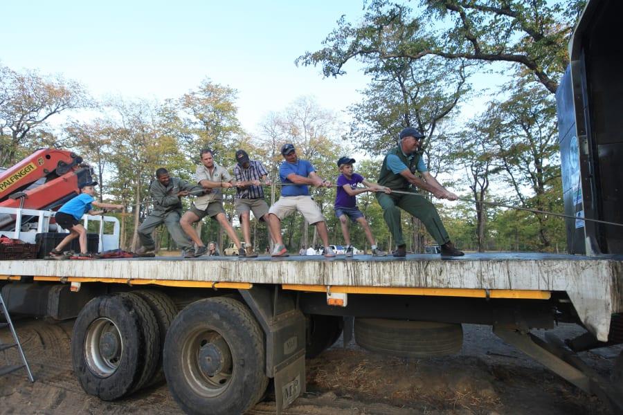 elephant relocation 9