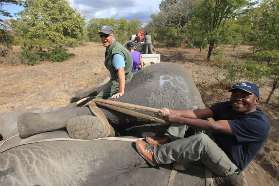 elephant relocation 10