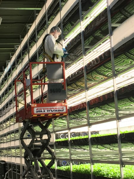 aerofarms farmer taking data