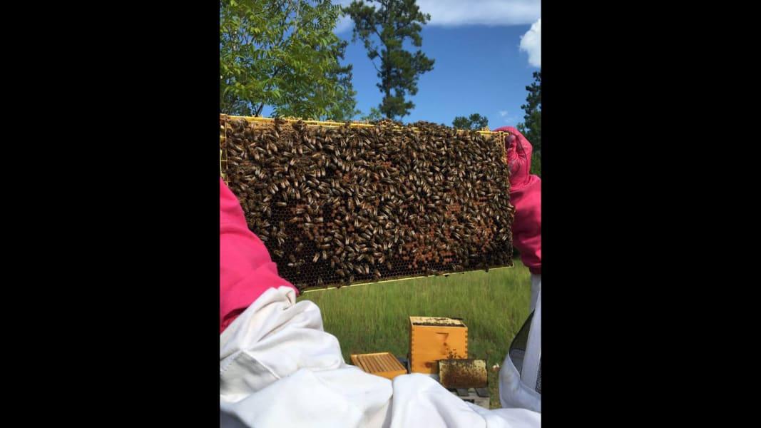 11 Zika spraying kills millions of bees