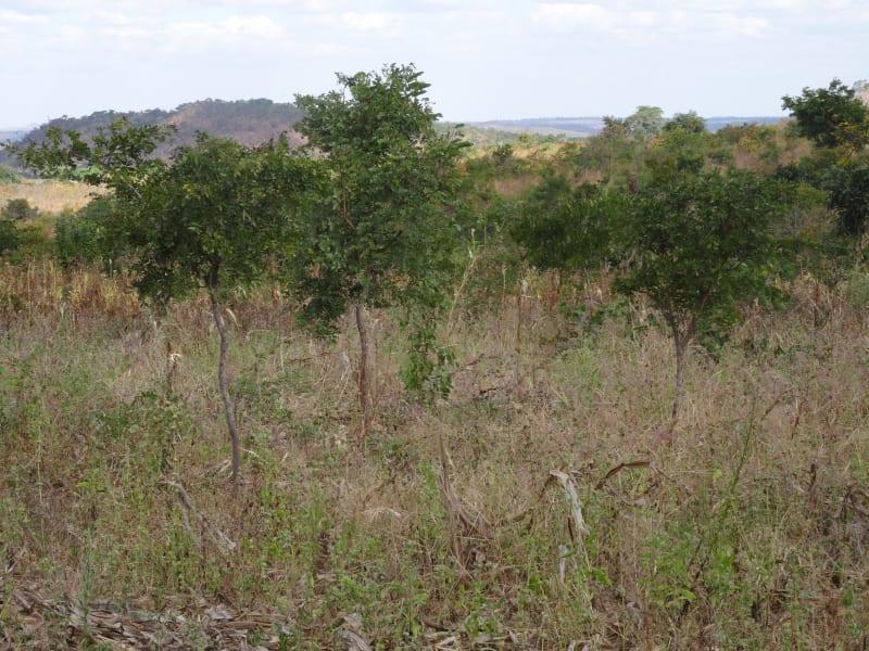 malawi desert