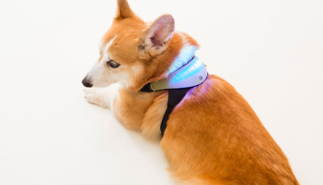 Inupathy wearable tech japan
