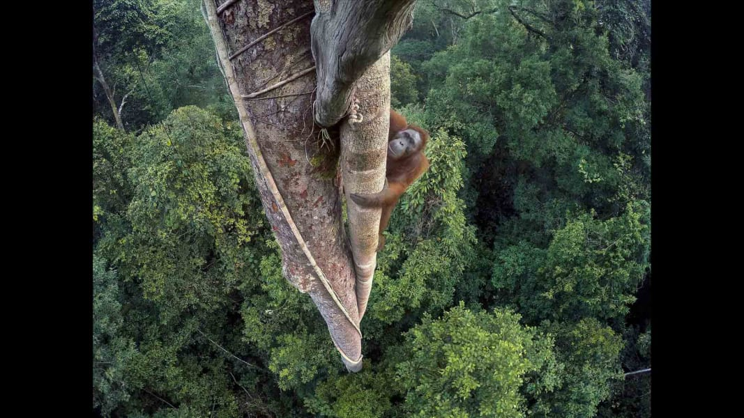 01 Wildlife Photographer of the Year 2016 RESTRICTED