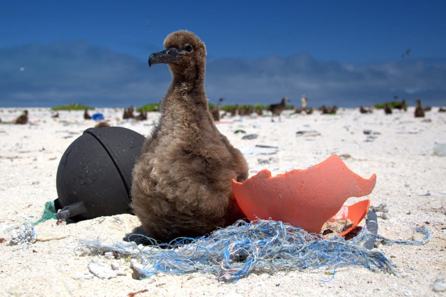 NPW Midway Chick Beach NOAA