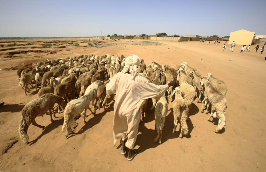 Sudan livestock