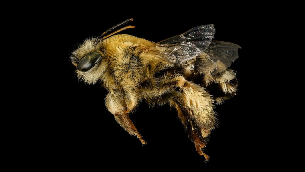 04 Bee Inventory
