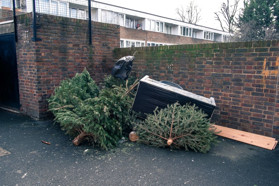 christmas tree discarded uk
