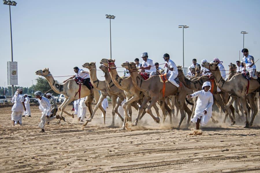 fazza championships camel races