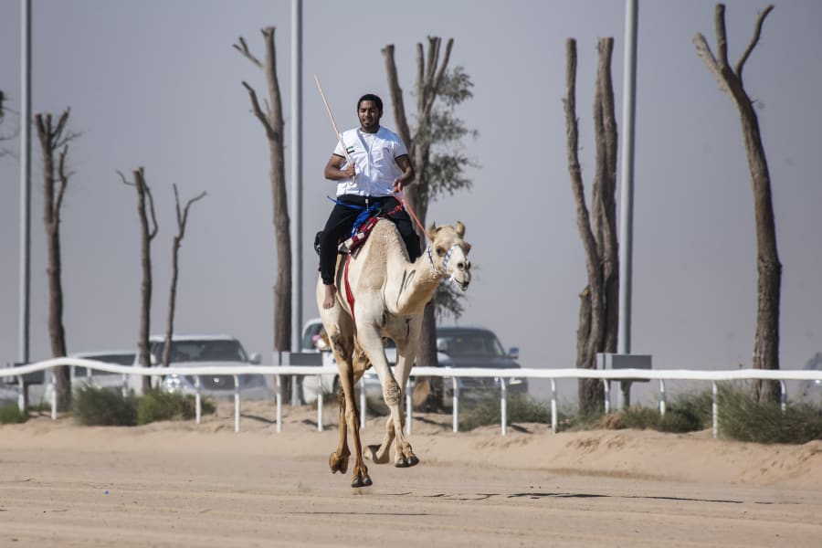 fazza championships camel races 5