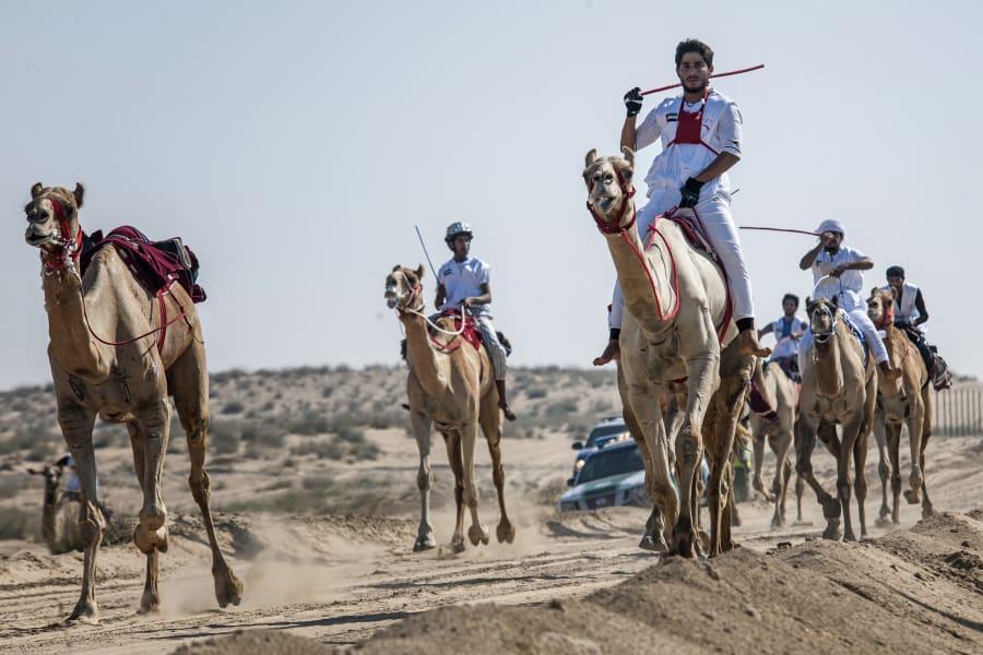 fazza championships camel races 9