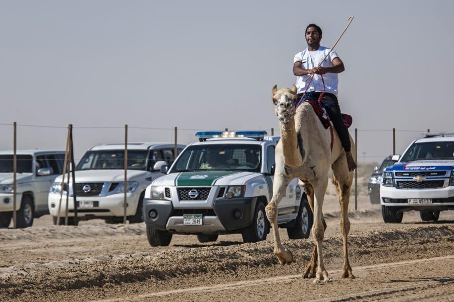 fazza championships camel races 10