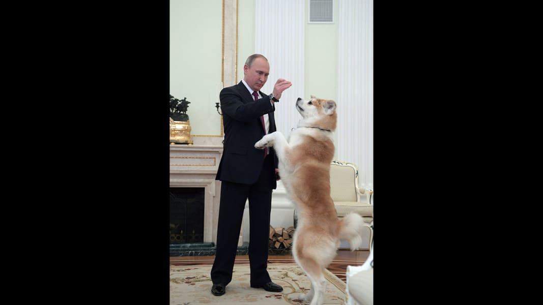 Putin cult Dog.