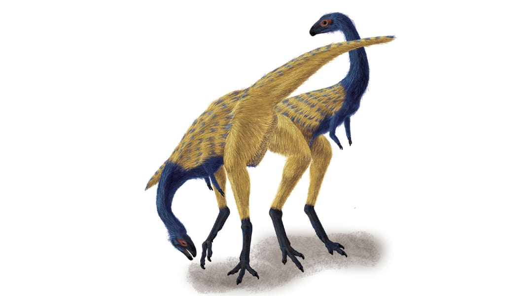Limusaurus tease