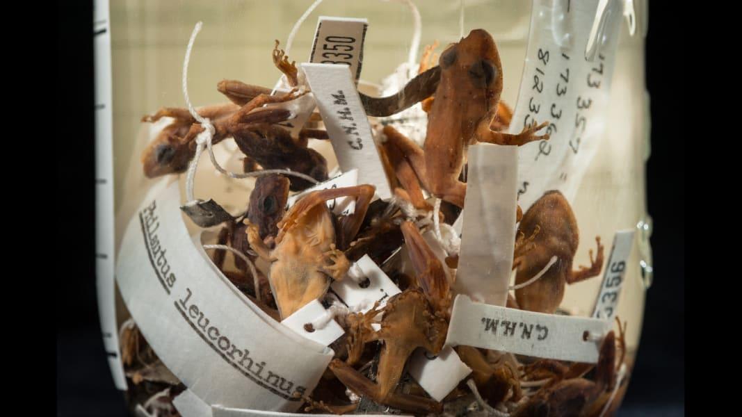 14 cnnphotos extinct species RESTRICTED