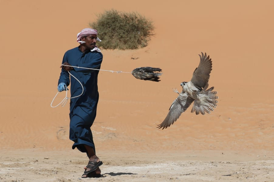 Falconry-getty-8