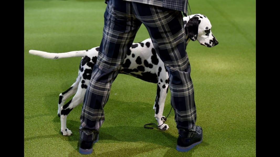 17 Westminster Dog Show 2017