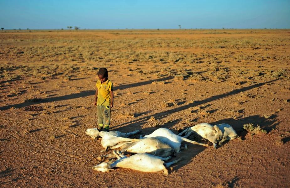 Boy dead goats drought