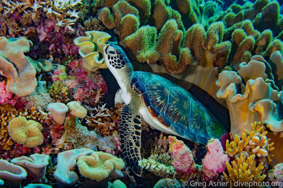 South China Sea Spratlys underwater 2