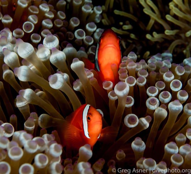 South China Sea Spratlys underwater 7