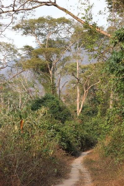 Habitat in Kumbira forest2_Elena Bersacola (1)