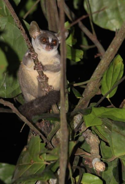 new species angola 2
