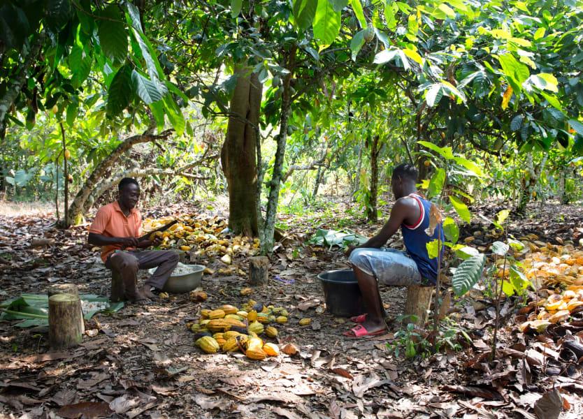tony's chocolonely on cocoa farm