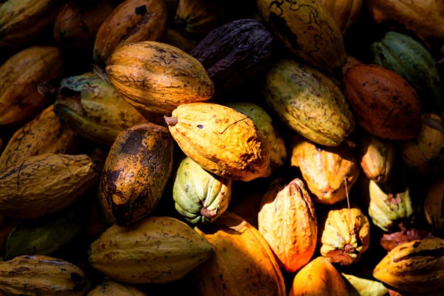 tony's chocolonely cocoa