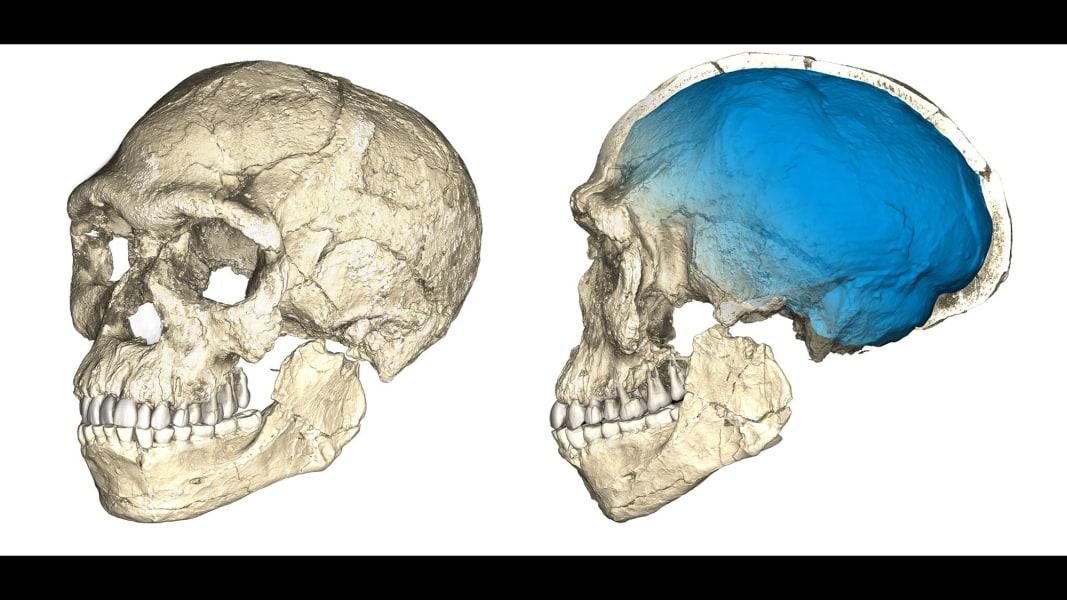 02 homo sapiens fossils