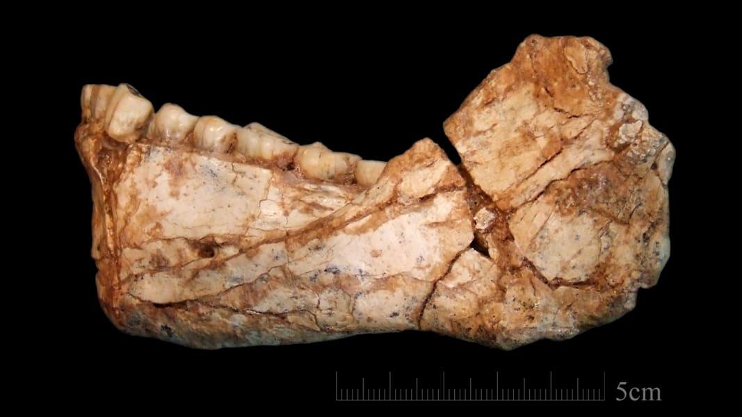 04 homo sapiens fossils