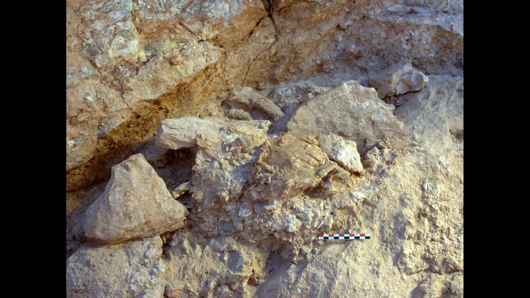 10 homo sapiens fossils
