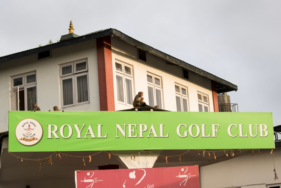 royal nepal golf club monkeys michael montano