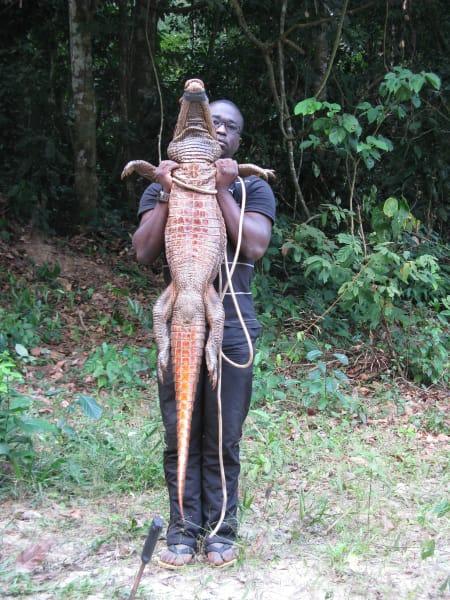 orange crocodiles gabon 4