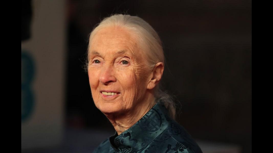 03 BAFTAS 2018 Jane Goodall