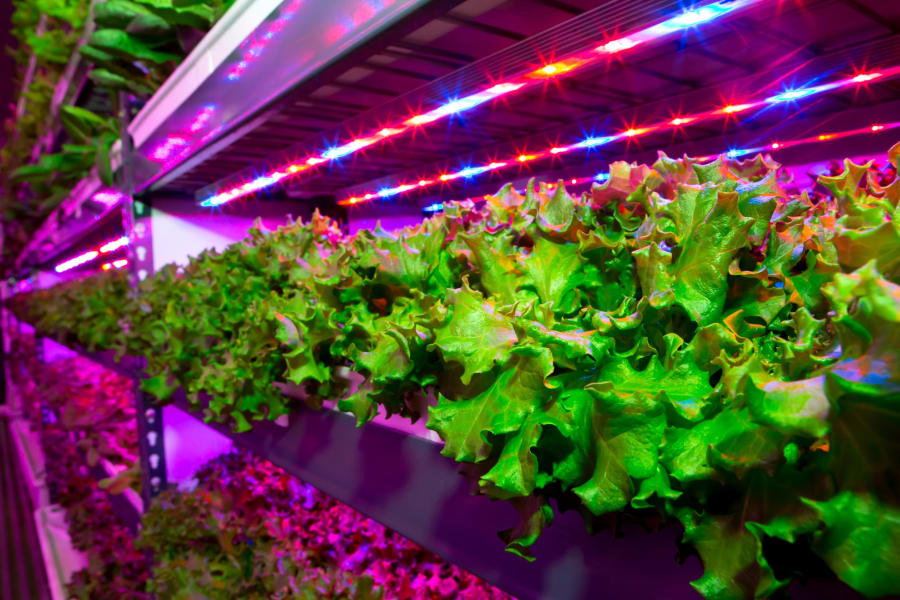 crop one holdings vertical farm
