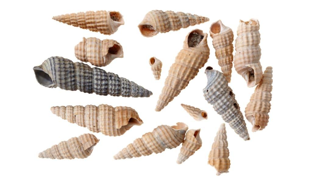 amsterdam excavation shells