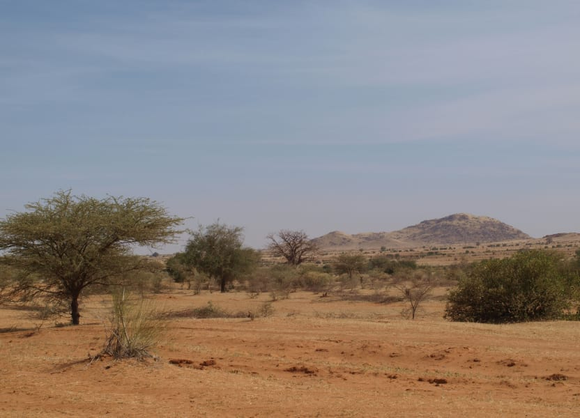 sudan acacia trees