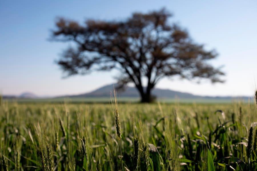 wheat farm zimbabwe