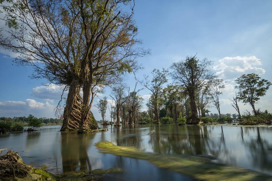 mekong cambodia tree