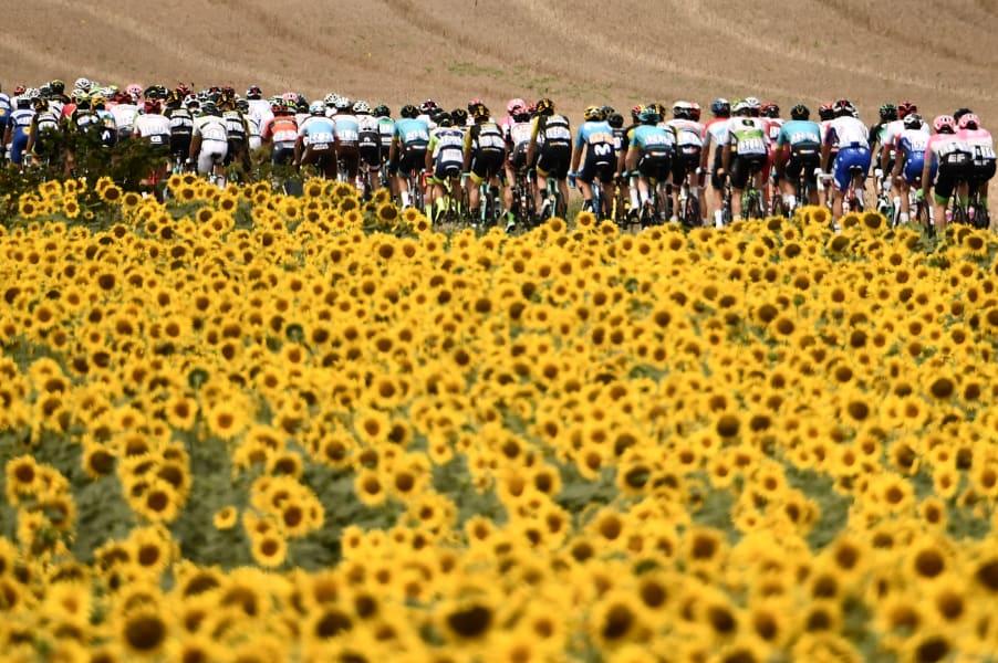 Tour sunflowers