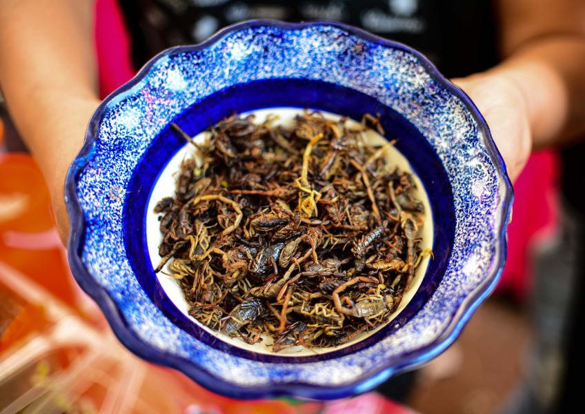 edible insects scorpions mexico