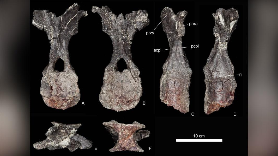 01 stegosaurus morocco