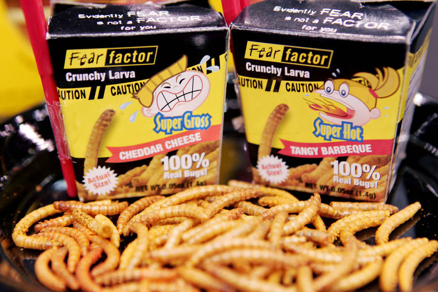 03 eating insects