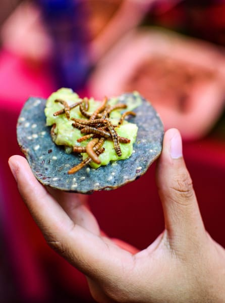 19 eating insects