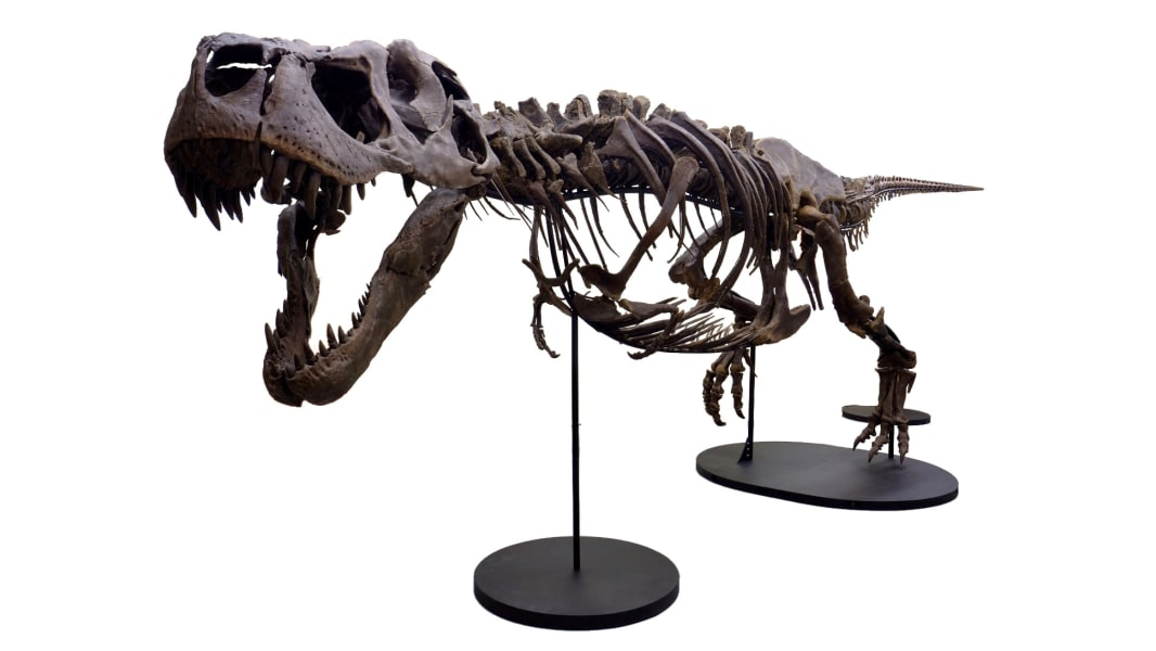 01 victoria the t rex