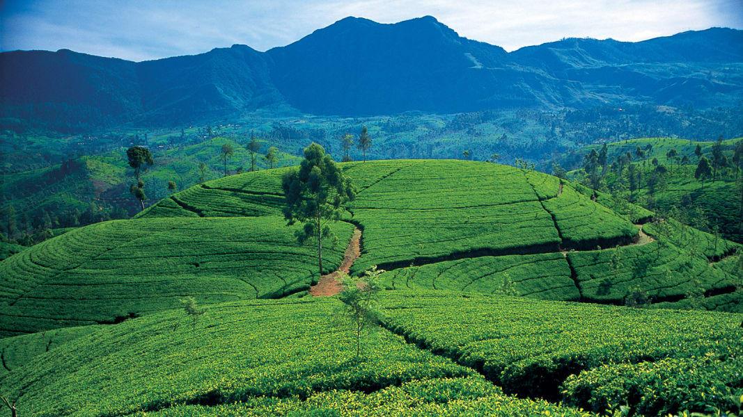 sri-lanka-tourism-images---Hill-Country---Rolling-Tea-Estates-02-(1)