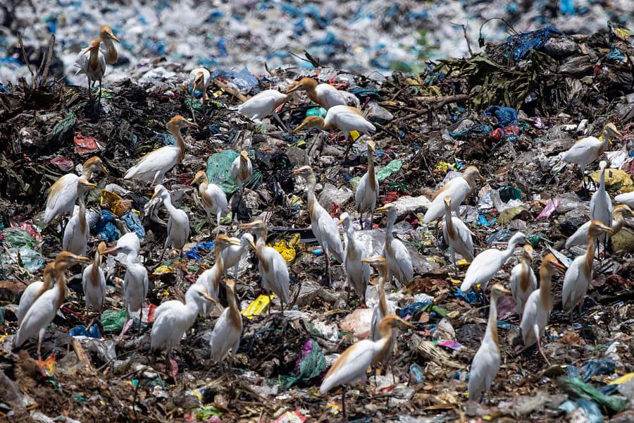 02 ocean wildlife plastic