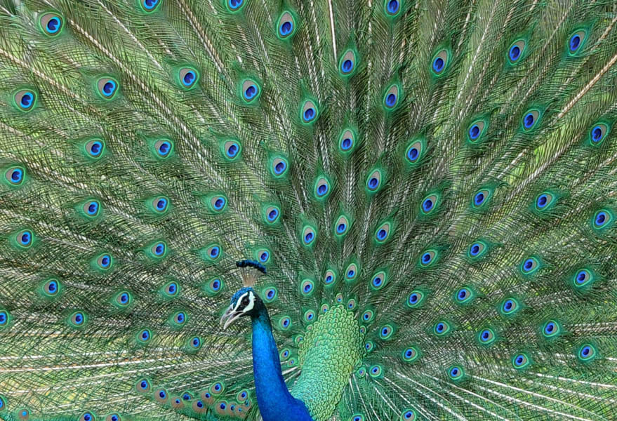03 sri lanka wildlife